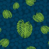 Modèle sans couture de feuille de Monstera avec le fond de ton de bleu marine Photo stock