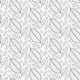 Modèle sans couture de feuilles fraîches dans le vecteur Fond sans fin de feuillage Images stock