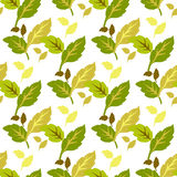Modèle sans couture de feuilles vert jaunâtre sur un fond blanc images libres de droits