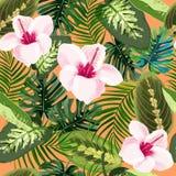 Modèle sans couture de fleurs et de plantes tropicales de ketmie Fond exotique lumineux d'été illustration libre de droits