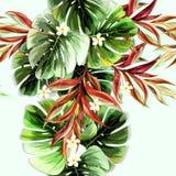 Modèle sans couture de fleurs de plantes tropicales illustration libre de droits