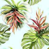 Modèle sans couture de fleurs de plantes tropicales illustration de vecteur