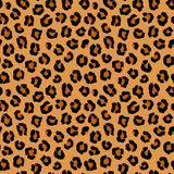 Modèle sans couture de léopard de vecteur Photo libre de droits