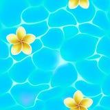 Modèle sans couture de l'eau bleue en piscine et fleurs Photos libres de droits