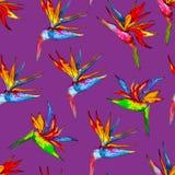 Modèle sans couture de la collection colorée de strelitzia Dirigez les fleurs exotiques d'un oiseau de paradis d'isolement sur la illustration libre de droits