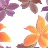 Modèle sans couture de lillies Images stock