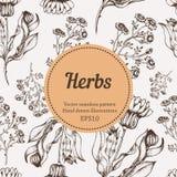 Modèle sans couture de nature de vecteur d'herbe de médecine Illustration de croquis de dessin de main Photos libres de droits