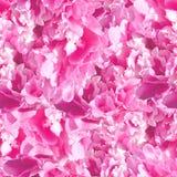 Modèle sans couture de pâle - pivoines roses images stock