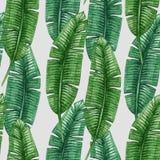 Modèle sans couture de palmettes tropicales d'aquarelle Images libres de droits