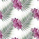 Modèle sans couture de palmier exotique et de fleur rose Lames de vert sur le blanc Photos libres de droits