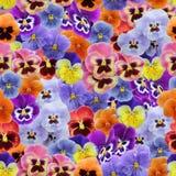 Modèle sans couture de pensée de violettes Photographie stock