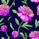 Modèle sans couture de pivoine rose illustration de vecteur