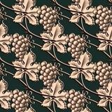 Modèle sans couture de raisin Vecteur de vintage Image stock