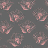 Modèle sans couture de ressort de fleur Illustration rouge de vecteur de pavots Image stock