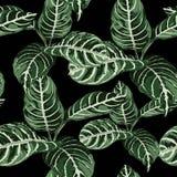 Modèle sans couture de style d'aquarelle avec les feuilles tropicales Belle copie sur toute la surface avec les usines exotiques  illustration stock