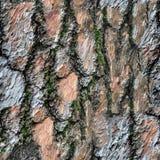 Modèle sans couture de texture d'écorce d'un pin avec l'élevage de mousse Image stock