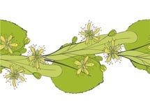 Modèle sans couture de tilleul Ornement d'une branche d'un arbre de Tilia Fond d'un basswood Limetree ou arbre Photographie stock