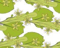 Modèle sans couture de tilleul Ornement d'une branche d'un arbre de Tilia Fond d'un basswood Limetree ou arbre de vecteur Photo libre de droits