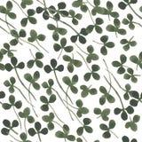 Modèle sans couture de trèfle d'aquarelle d'illustration florale organique de fines herbes de nature illustration de vecteur