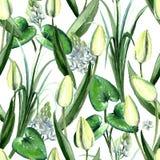 Modèle sans couture de tulipes blanches tirées par la main d'aquarelle Photo libre de droits