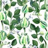 Modèle sans couture de tulipes blanches tirées par la main d'aquarelle Image libre de droits