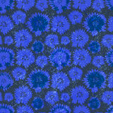 Modèle sans couture de vecteur avec des bleuets Illustration de fond floral Images stock