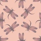 Modèle sans couture de vecteur avec la libellule brillante pourpre sur un fond rose tendre Images stock