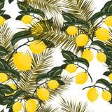 Modèle sans couture de vecteur avec le citronnier tropical Photographie stock