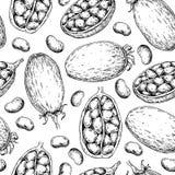 Modèle sans couture de vecteur de baobab Dessin de Superfood Sain organique illustration stock