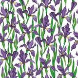 Modèle sans couture de vecteur d'iris illustration libre de droits
