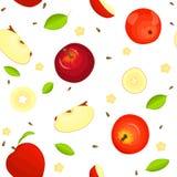 Modèle sans couture de vecteur de fruit mûr Les pommes rouges juteuses Delicious, entières, tranche, demi, part sur le fond blanc Photographie stock