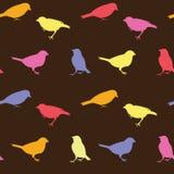 Modèle sans couture de vecteur de vintage avec des oiseaux Photo stock
