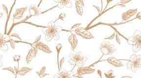 Modèle sans couture de vintage floral avec la cerise japonaise Photos stock