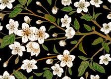 Modèle sans couture de vintage floral avec la cerise japonaise Image libre de droits