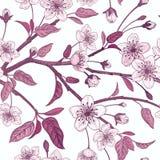 Modèle sans couture de vintage floral avec la cerise japonaise Images stock