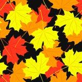 Modèle sans couture des feuilles d'érable Vecteur Photographie stock