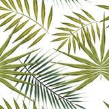 Modèle sans couture des feuilles tropicales vertes sur le fond blanc Palmiers exotiques de papier peint d'été Photographie stock libre de droits