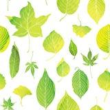 Modèle sans couture des feuilles vertes Images libres de droits