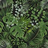 Modèle sans couture des feuilles vertes fond tropical vert dans W photos libres de droits
