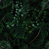 Modèle sans couture des feuilles vertes fond tropical vert dans W photographie stock