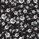 Modèle sans couture des fleurs blanches sur un fond noir Pommier de floraison abstrait dans des couleurs noires et blanches Images libres de droits