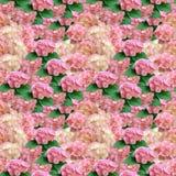 Modèle sans couture des fleurs d'hortensia photo libre de droits