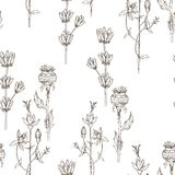 Modèle sans couture des fleurs de fines herbes sauvages Vecteur Illustration tirée par la main Concept de fleur pour épouser des  illustration stock
