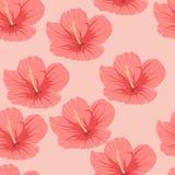 Modèle sans couture des fleurs roses tropicales de ketmie Images libres de droits