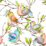 Modèle sans couture des oiseaux d'aquarelle sur les branches, tiré par la main sur un fond blanc Images stock