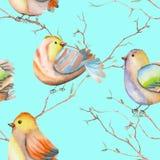 Modèle sans couture des oiseaux d'aquarelle sur les branches, tiré par la main sur un fond bleu Images stock