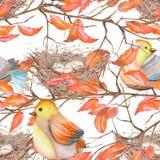 Modèle sans couture des oiseaux et des nids d'aquarelle Photos libres de droits