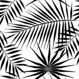 Modèle sans couture des palmiers exotiques Feuilles de noir sur le fond blanc Photographie stock