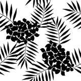 Modèle sans couture des palmiers exotiques Feuilles de noir sur le fond blanc Image libre de droits