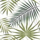 Modèle sans couture des palmiers exotiques Feuilles tropicales vertes sur le fond blanc Photo libre de droits